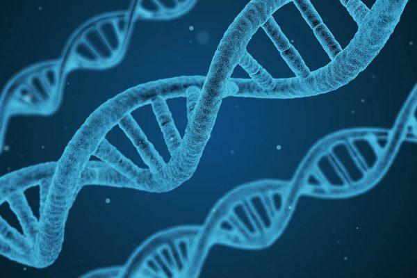 DNA-prostatype